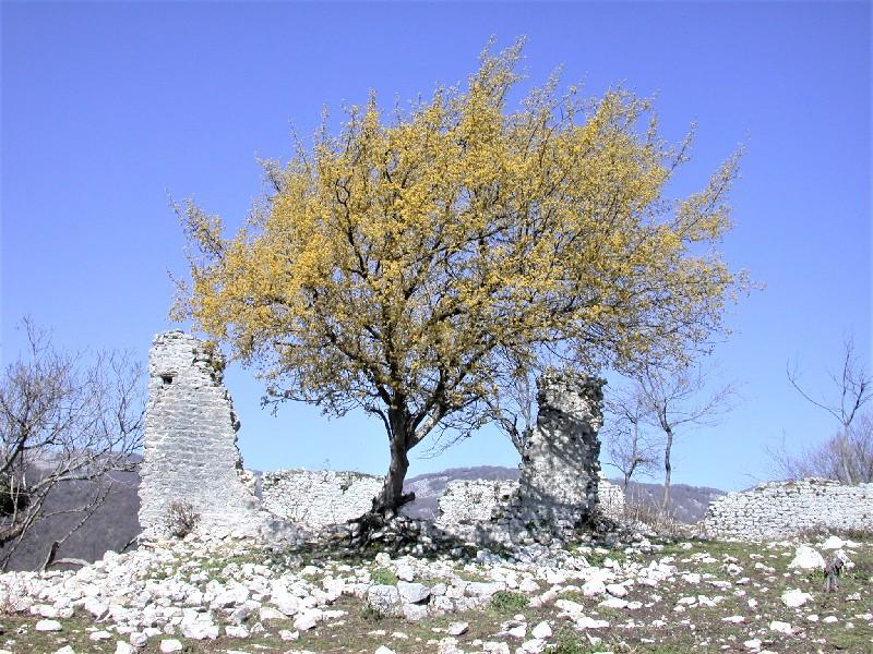 https://www.agenziaeventi.org/immagini_news/25-11-2020/corniolo-lucretili-giornata-dellalbero-600.jpg